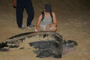 zeeschildpad-1